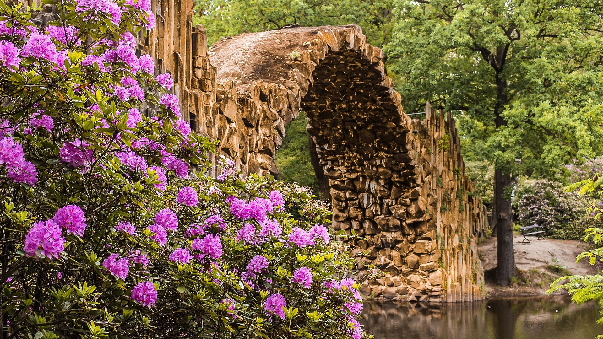Header Teich Rhododendron (Emerson)