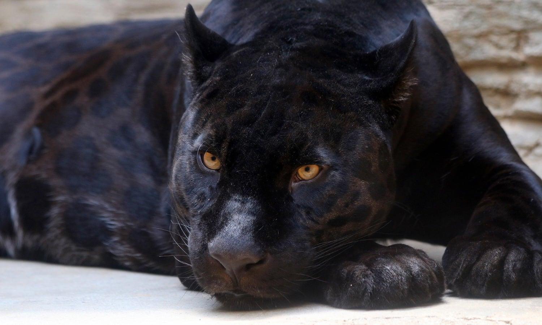 Rainer Maria Rilke: Der Panther (Gedichtinterpretation)
